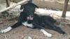 Tayland: Annesi tarafından canlı canlı gömülen bebeği köpek kurtardı
