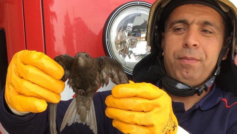 Havalandırma boşluğuna düşen ebabil kuşunu, itfaiye ekipleri kurtardı