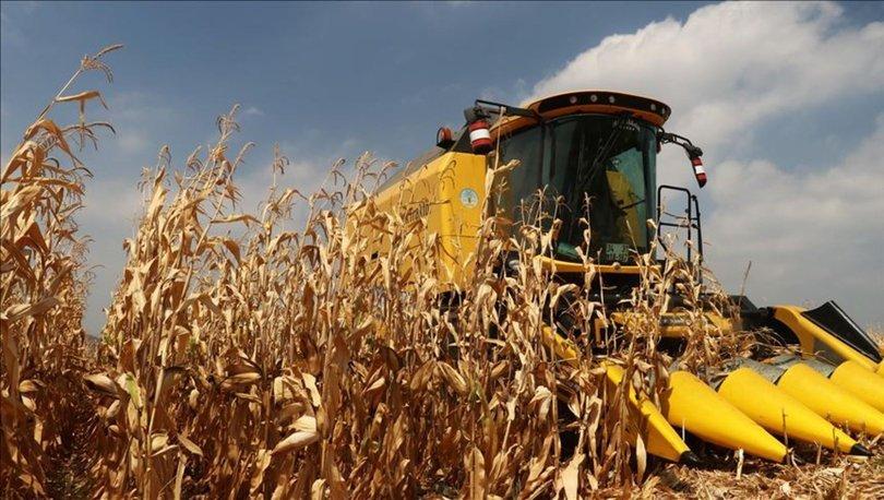 Dane mısır desteği