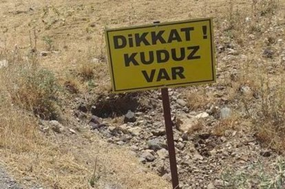köy kuduz karantinasına alındı
