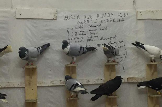 Kuş almak isteyene sabıka kaydı soruyor!