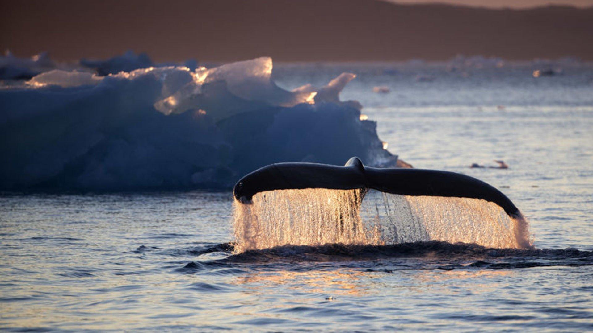 Kuzey Kutbu'nda buzlar ısınıyor: Summer is Coming!