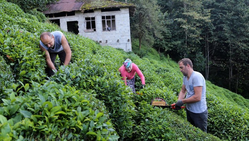 Çay üreticileri