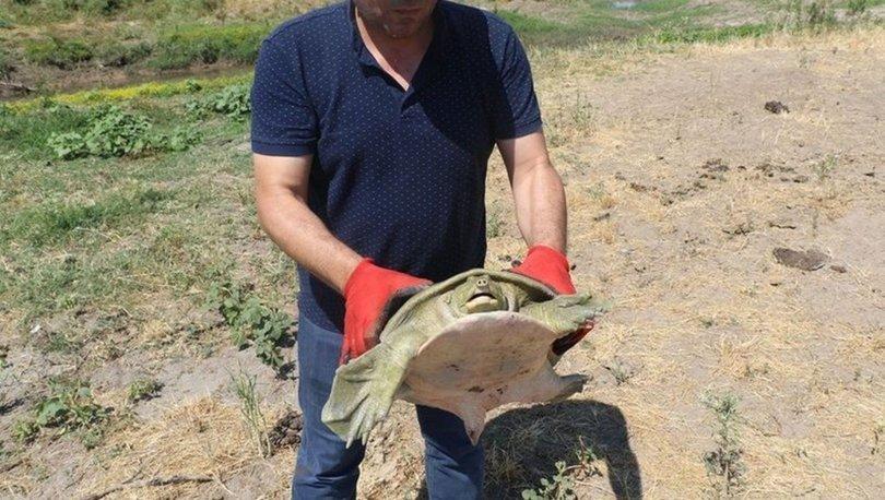 Diyarbakır'da bulunan Fırat kablumbağası Dicle Nehri'ne bırakıldı