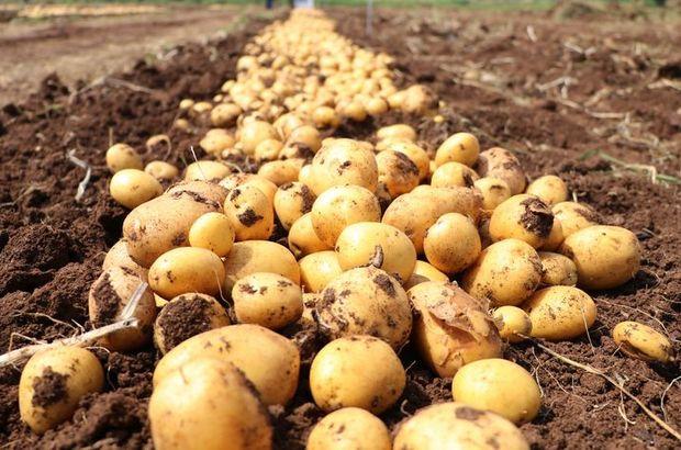 'Türkiye patates üretiminde ilk 10'da'