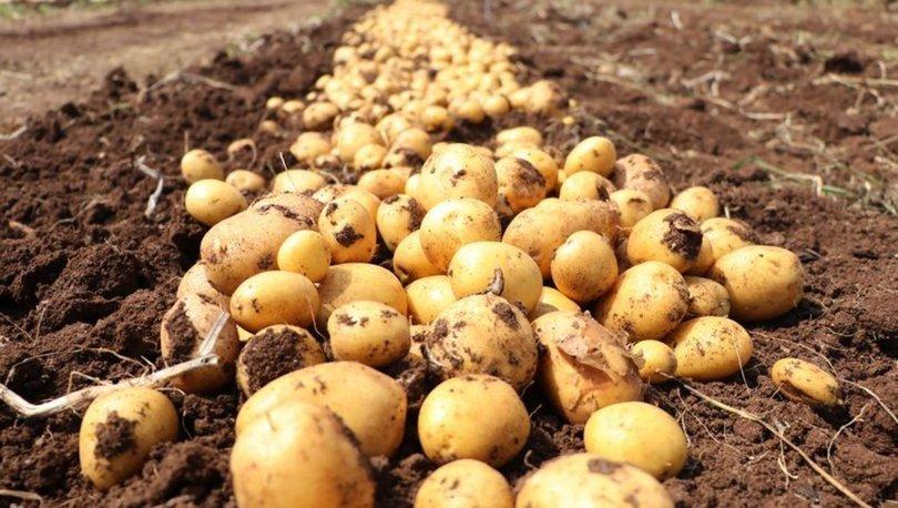 Bakan Pakdemirli: Türkiye patates üretiminde dünyada ilk 10'da