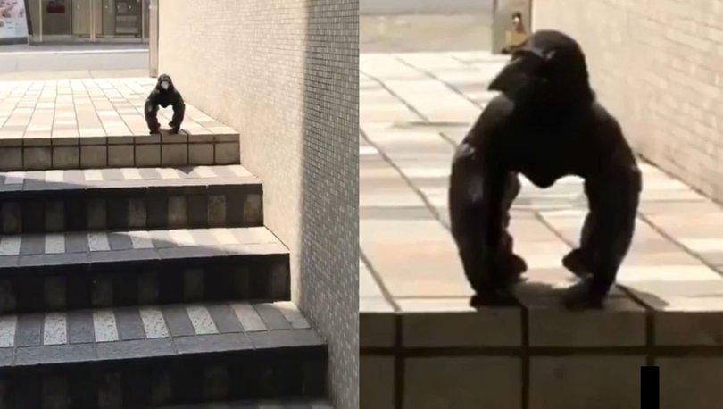 Gorili taklit eden karga