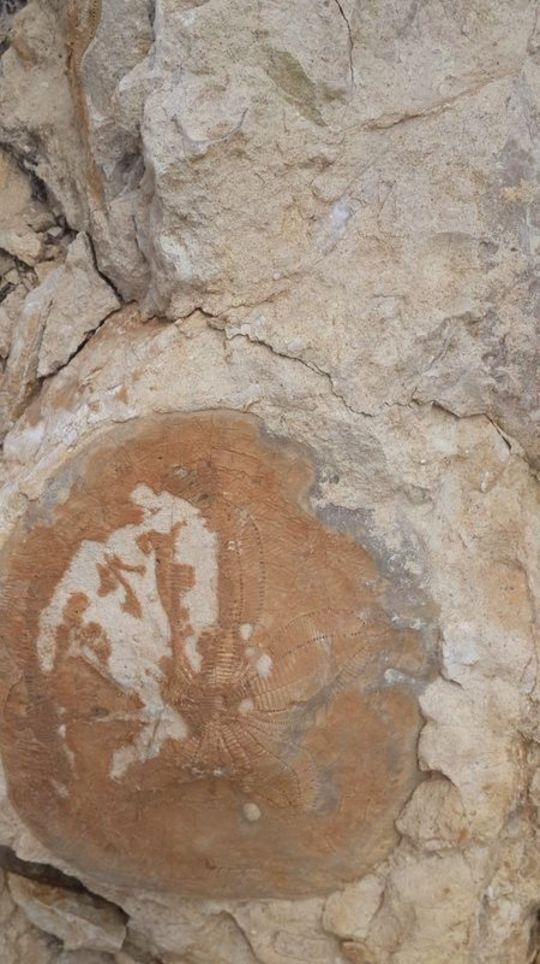 Kahramanmaraş'ta 35 milyon yıllık fosil bulundu ile ilgili görsel sonucu