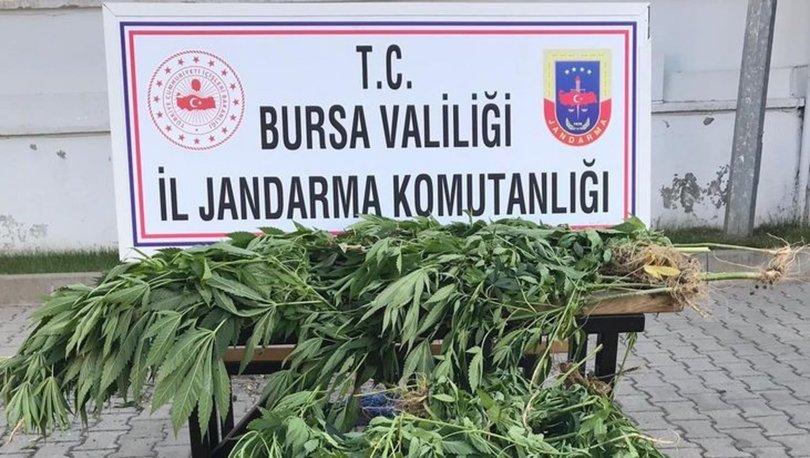 Bursa'da Hint keneviri operasyonu