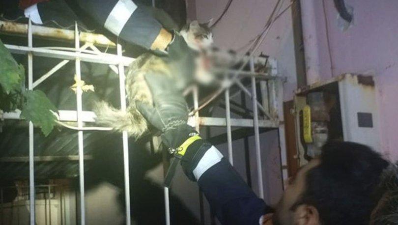 kedi kurtarıldı