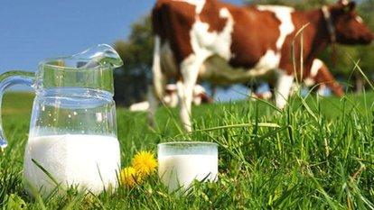 Toplanan inek sütü miktarı