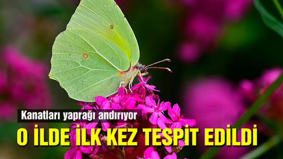 Burdur'da yeni bir kelebek türü