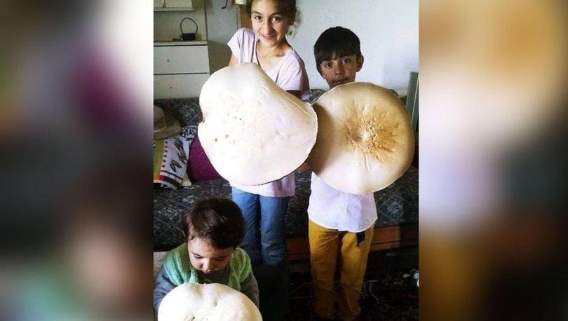 3 kilogramlık dev mantar