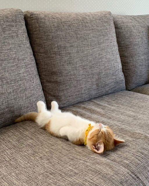 Sırt üstü uyuyan kedi sosyal medyanın gözdesi oldu