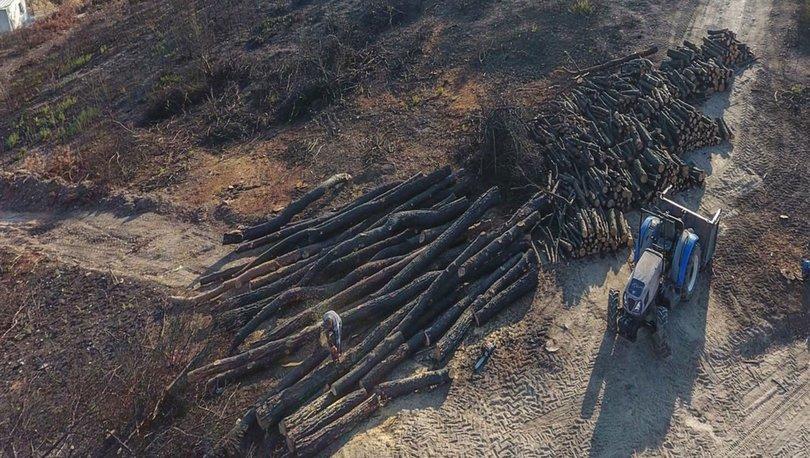 Yanan orman alanları
