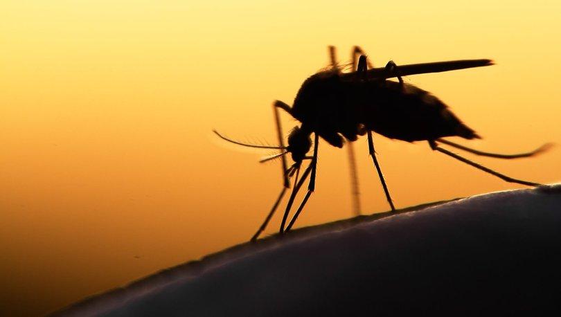 Batı Nil Ateşli Virüsü