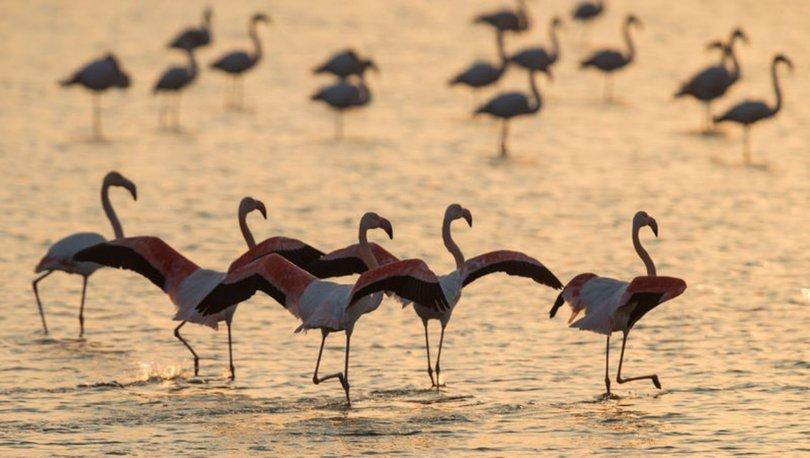 Gediz Deltası'na 'UNESCO' çağrısı