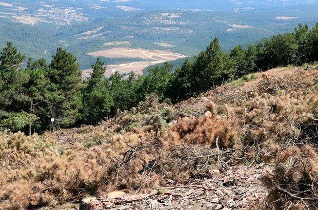 Kaz Dağları'nda altın aranmasına ilişkin açıklama