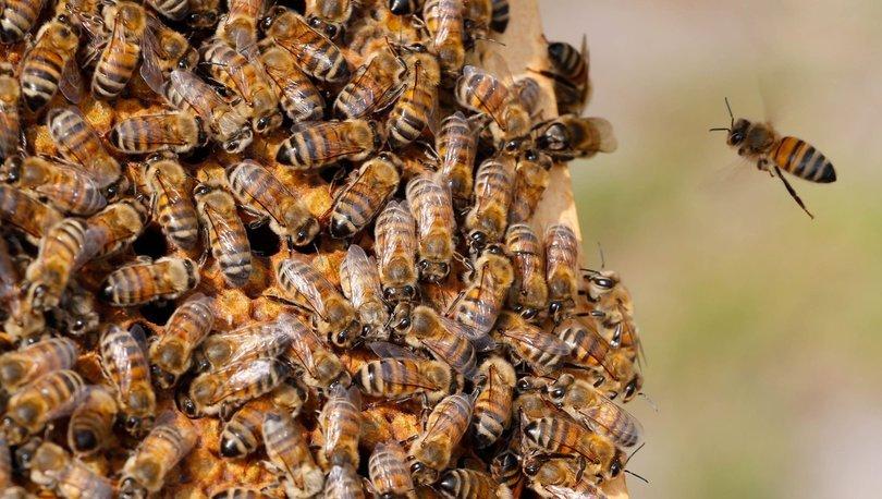 Türk arısı