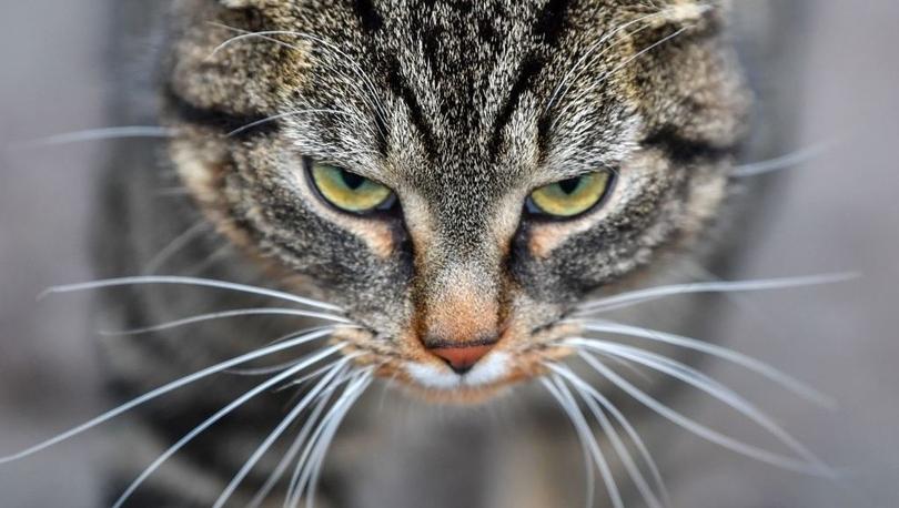 ABD: 79 yaşındaki kadına sokak kedilerini beslediği için 10 gün hapis cezası