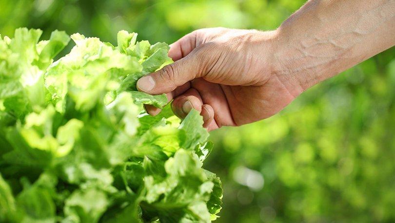 Bitki odaklı beslenme küresel ısınmada kilit rol oynuyor