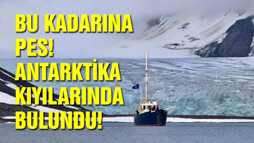 Bu kadarına pes! Antarktika kıyılarında bulundu!