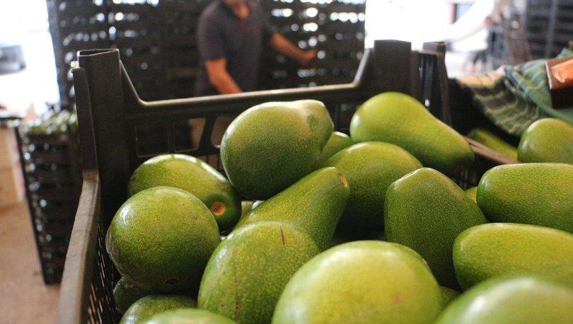 Tropikal meyve üreticiliği