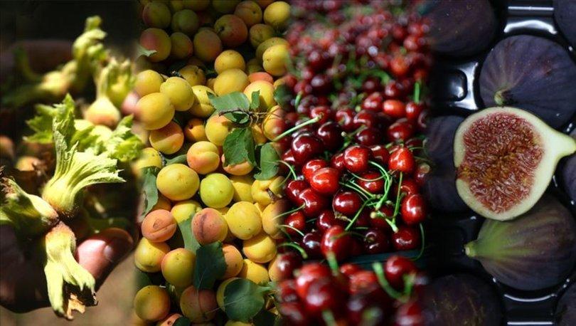 fındık, kiraz, incir ve kayısı üretimi