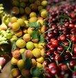 """Tarim ve Orman Bakani Bekir Pakdemirli, """"Ülkemiz findik, kiraz, incir ve kayisi üretimi ve ihracatinda dünyada lider konumda bulunuyor. Sadece bu üründen toplam 2,17 milyar dolarlik ihracat geliri elde ettik"""" dedi"""