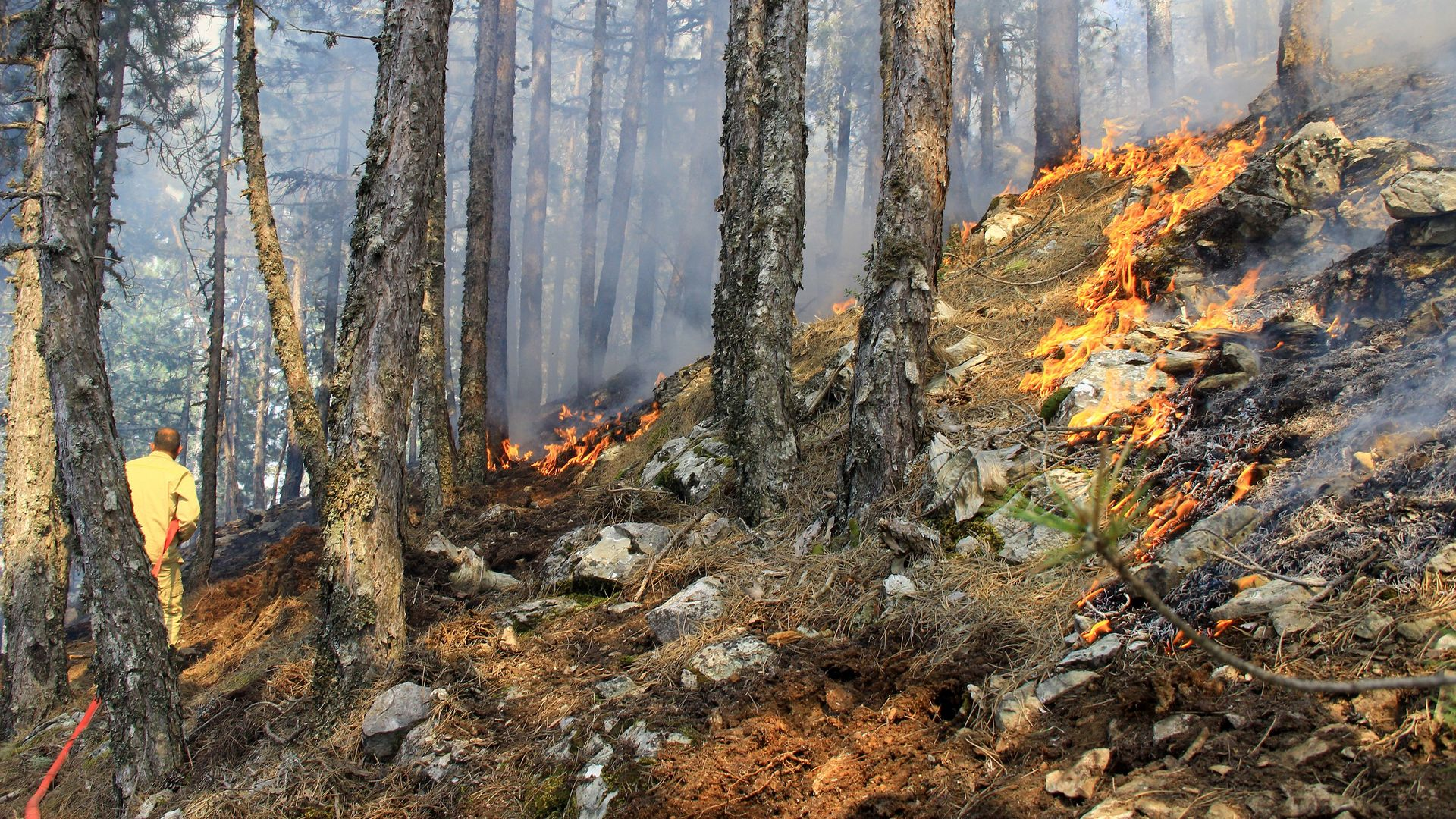 KAHREDEN HABER! İşte Türkiye'de son bir ayın orman yangın bilançosu!