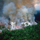 KÜRESEL FELAKET: AMAZON YAĞMUR ORMANLARI YANIYOR