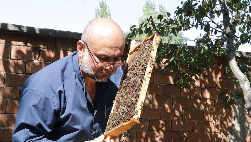 Sokmayan arılar