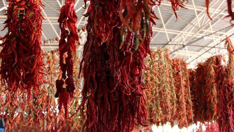 kırmızı biber üretimi