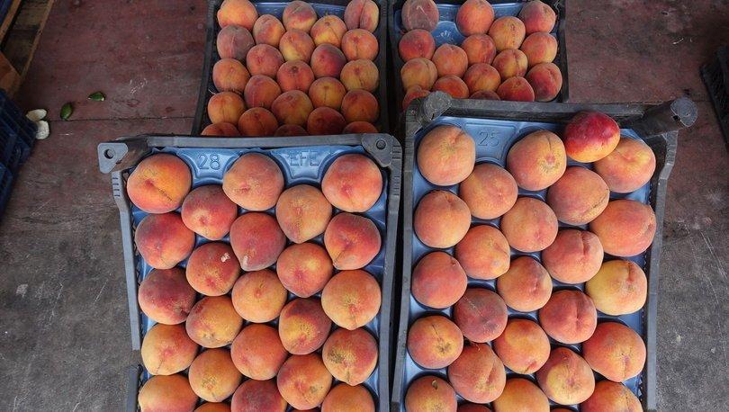 Rusya'ya yaş meyve sebze ihracatı