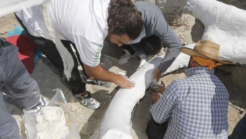 7,5 milyon yıllık fosil