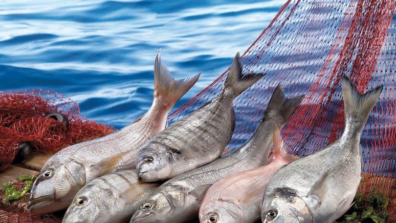 Hayvansal ürünlerde ihracat