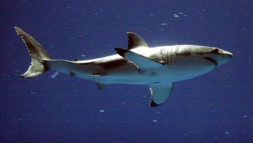 Köpek balığı saldırısı