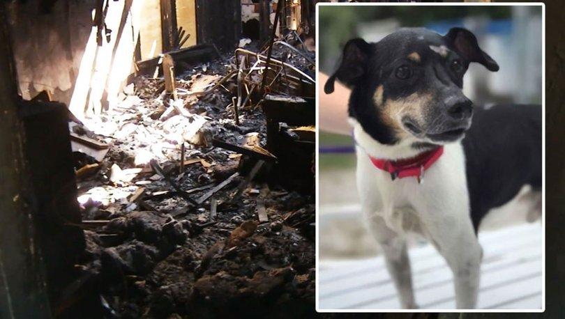 Sahiplerini kurtarmaya çalışırken ölen köpek