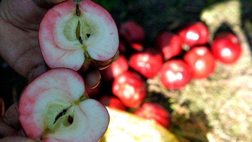 kırmızı elmaya coğrafi işaret