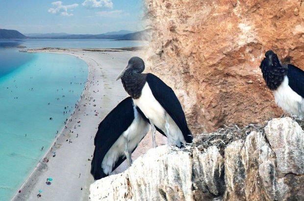 Salda Gölü'nde şaşırtan görüntü!