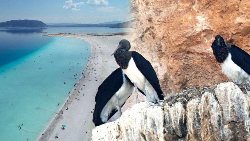 Salda Gölü'nde şaşırtan görüntü! 25 yıl sonra kaydedildi - Haberler