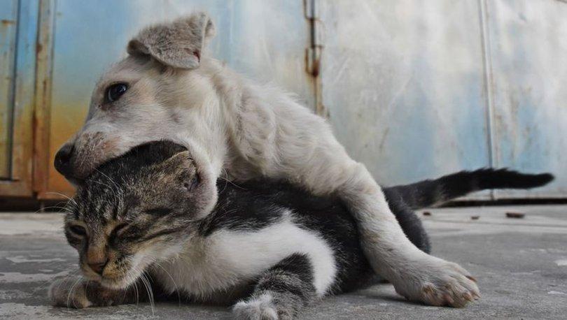 Kedi ile köpek yavrusunun kalpleri ısıtan dostluğu