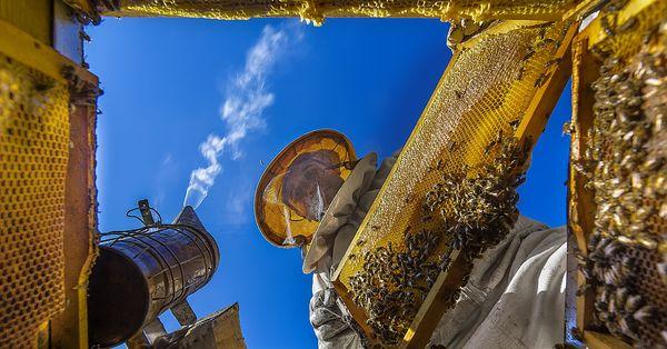 Anadolu'nun kalbinden Sarı Kareler