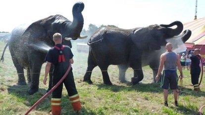 danimarka sirk filleri