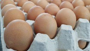 Türk yumurtaları ABD'ye teste gitti