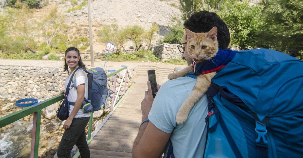 Artvin Özge Hamza 10 bin kilometre kedi Azman ile ilgili görsel sonucu