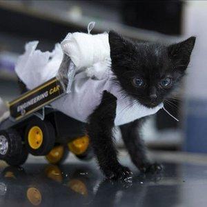Yavru kediye oyuncaktan yürüteç yaptılar