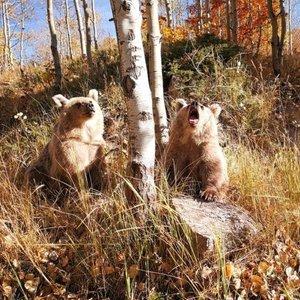 Nemrut ziyaretçilerini boz ayılarla karşılıyor