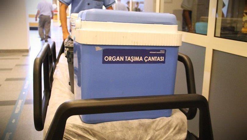 organ nakli eğitimi