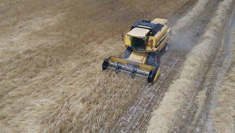 buğday,